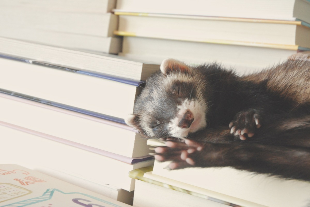 Friday Featured Photographer: The Book Ferret